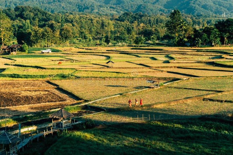 La vista dell'occhio di Bitd del giacimento del riso con i monaci tailandesi locali sta camminando immagini stock libere da diritti