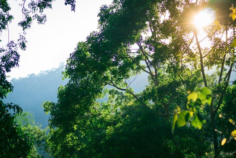 La vista della natura della foglia verde su fondo vago in giardino con lo spazio della copia facendo uso come di piante naturali  immagine stock libera da diritti