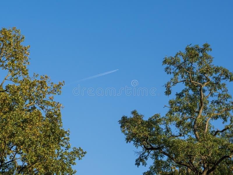 La vista di angolo basso nella quercia completa con il cielo e l'aereo immagini stock libere da diritti
