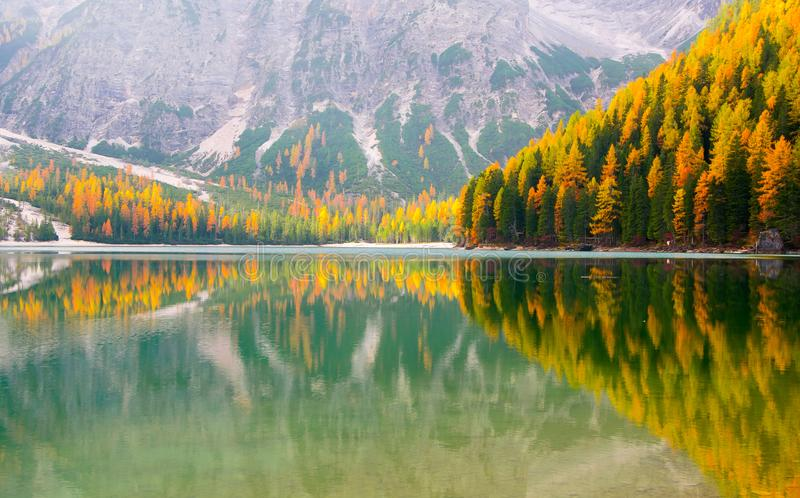 La vista escénica de alerces de oro reflejó en el agua, lago Braies imágenes de archivo libres de regalías