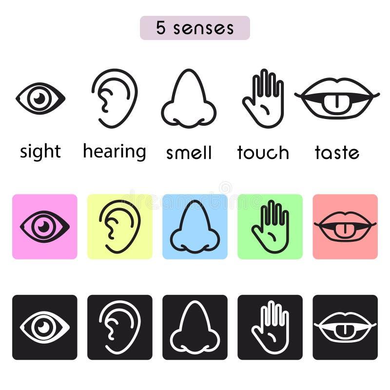 La vista humana, la audiencia, el olor, el tacto y el gusto de cinco sentidos vector la línea ejemplo del icono stock de ilustración