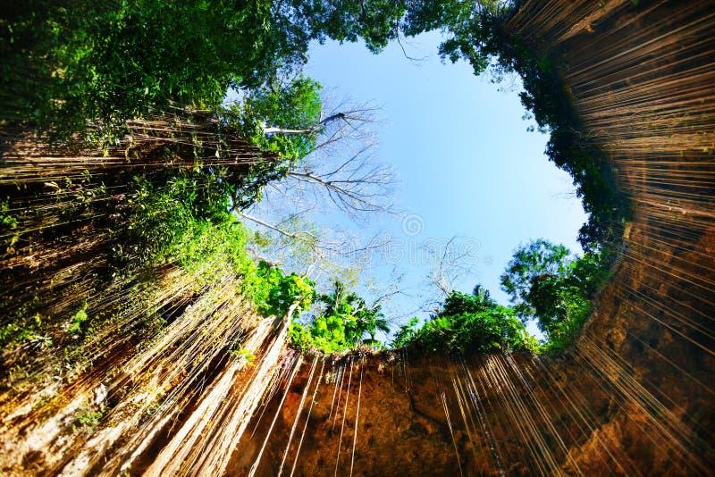 La vista inferior del cenote de Ik-Kil con la ejecución arraiga imagen de archivo