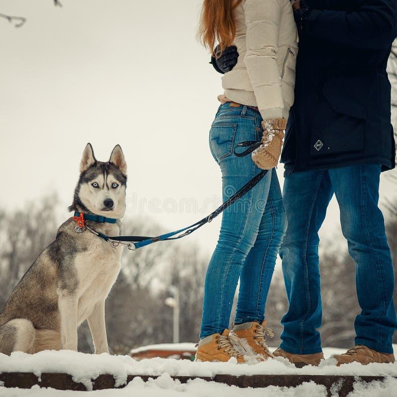 La vista integral del husky siberiano que se coloca cerca de los pares de abrazo Flor en la nieve foto de archivo