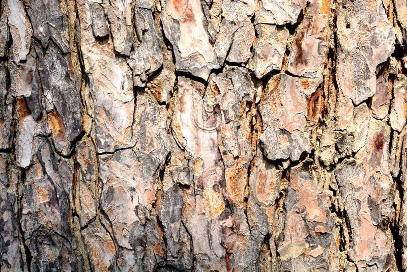 La vista laterale dell'albero di vecchia struttura di legno fotografia stock libera da diritti