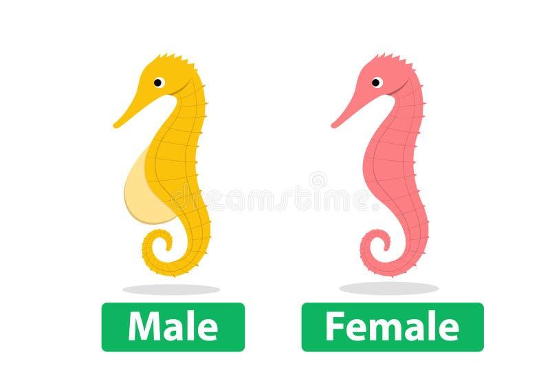 La vista laterale, il maschio e l'ippocampo femminile vector il fumetto illustrazione di stock