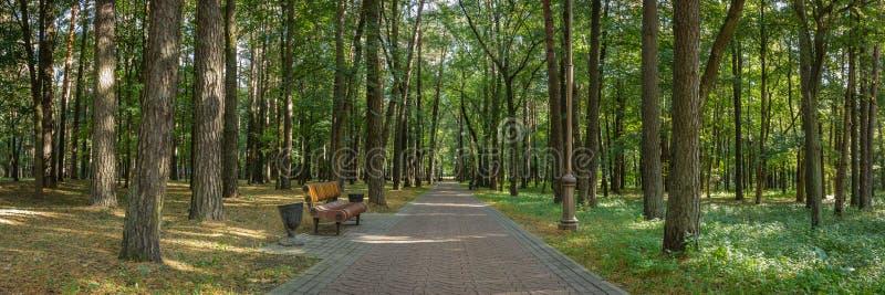 la vista panorámica del parque público de la ciudad con un banco al borde de un callejón sombrío aseado alineó con los árboles al fotos de archivo libres de regalías
