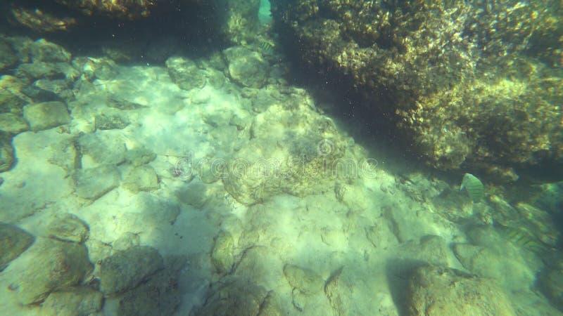 La vista in prima persona, un uomo nuota sotto l'acqua che esamina il mondo subacqueo ed il piccolo pesce tropicale fotografia stock