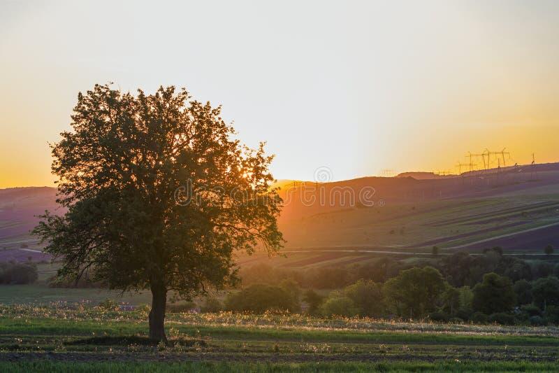 La vista reservada y pacífica del árbol verde grande hermoso en la puesta del sol que crecía solamente en campo de la primavera e foto de archivo libre de regalías