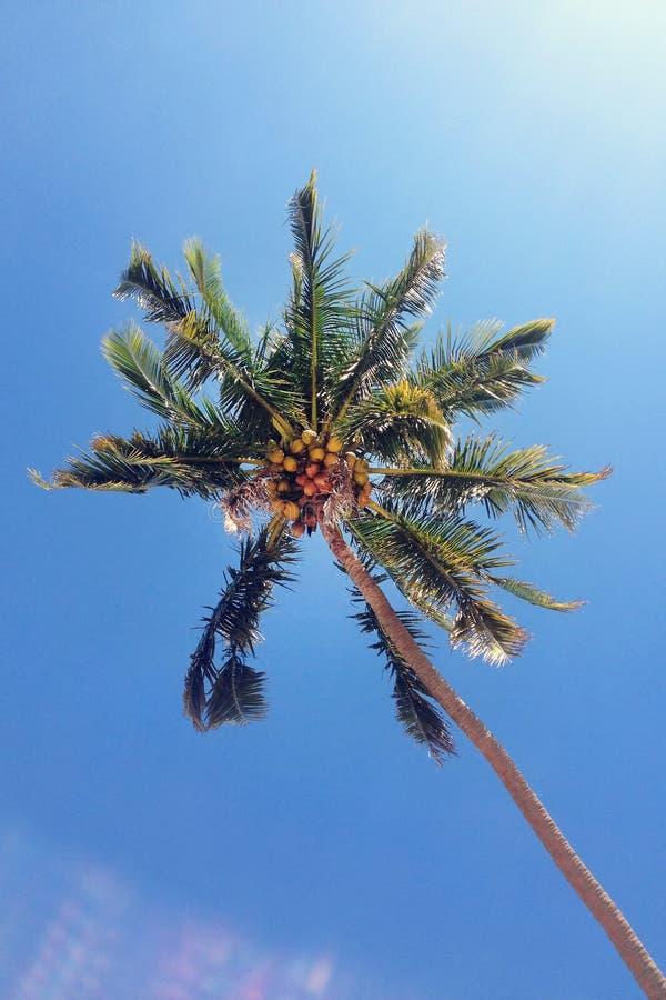 La vista sugli alberi del cocco su un fondo di un cielo blu immagine stock