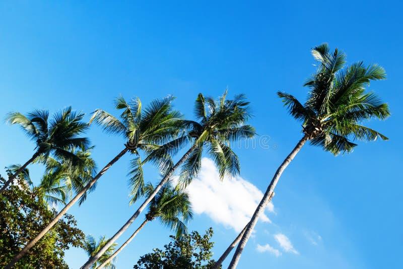 La vista sugli alberi del cocco su un fondo di un cielo blu fotografia stock