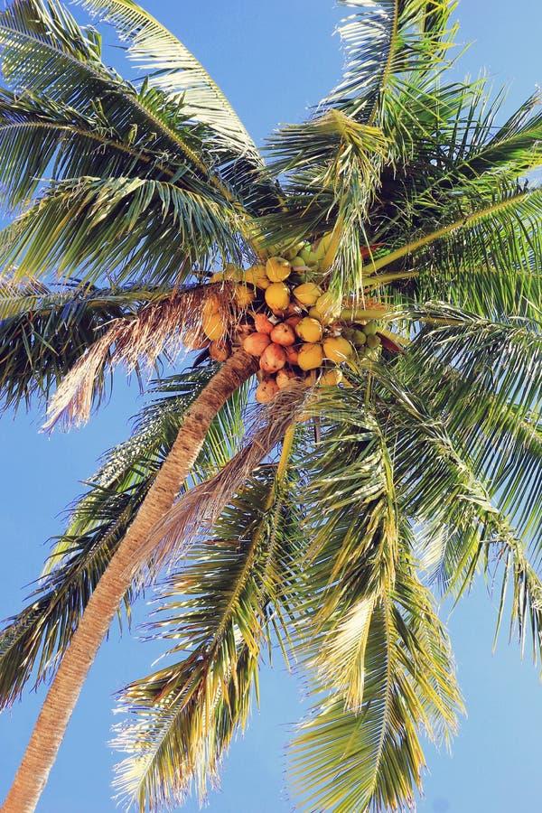 La vista sul cocco su un fondo di un cielo blu Foto modificata fotografia stock libera da diritti