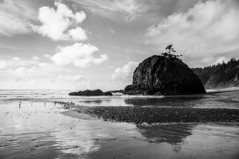 La vista sul mare in bianco e nero drammatica con formazione rocciosa e gli alberi nodosi hanno riflesso in una spiaggia bagnata  immagine stock libera da diritti