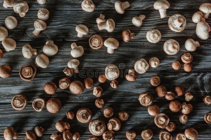 la vista superior del champiñón blanco y marrón prolifera rápidamente fotos de archivo libres de regalías