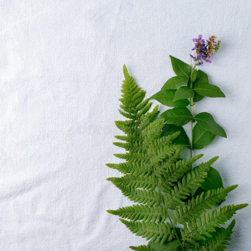 La vista superior del helecho tropical verde se va en fondo azul del tejido del algodón natural Endecha plana Concepto mínimo del fotografía de archivo