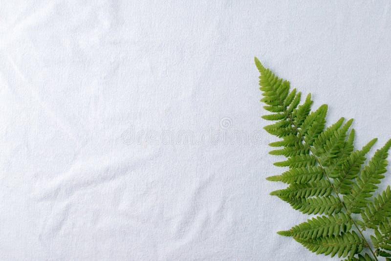 La vista superior del helecho tropical verde se va en fondo azul del tejido del algodón natural Endecha plana Concepto mínimo del fotos de archivo libres de regalías