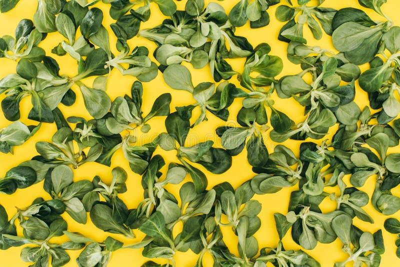 la vista superior del modelo hecha de la ensalada de maíz verde hermosa se va fotos de archivo