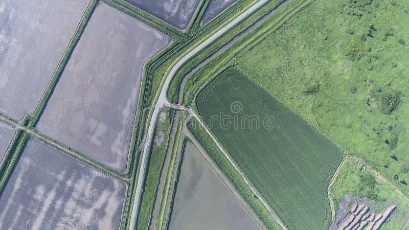 La vista superiore del giacimento di grano e del campo arato sotto il fico Fucilazione da un fuco immagine stock libera da diritti