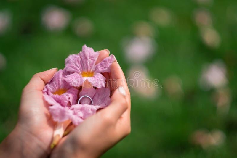 La vista superiore sul ` s della donna passa la tenuta del fiore rosa fotografie stock