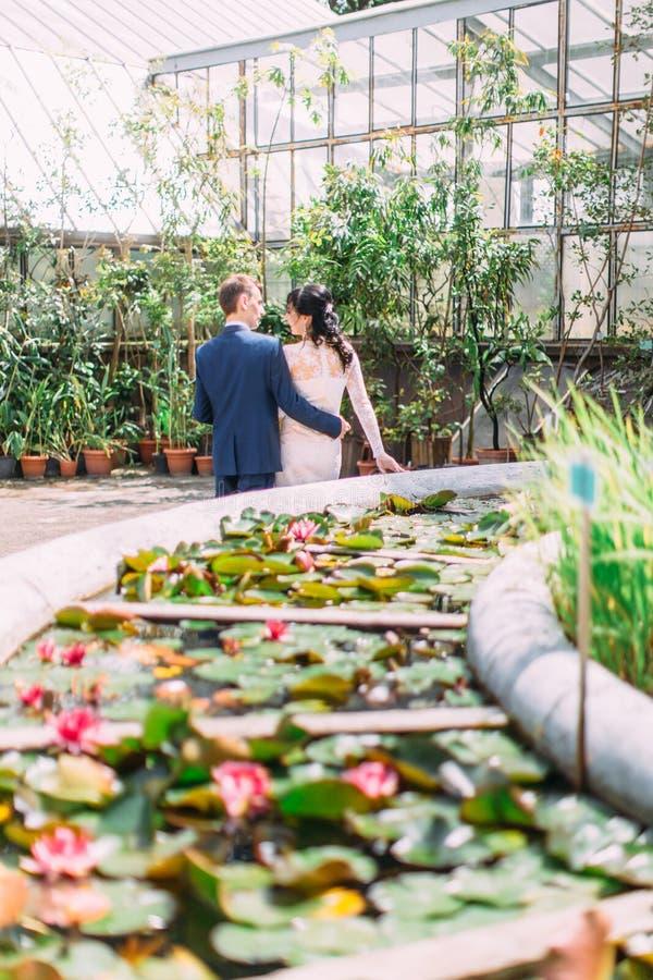 La vista trasera de los pares del recién casado que caminan en el jardín botánico La vista de la fuente con los lirios de agua imagen de archivo libre de regalías