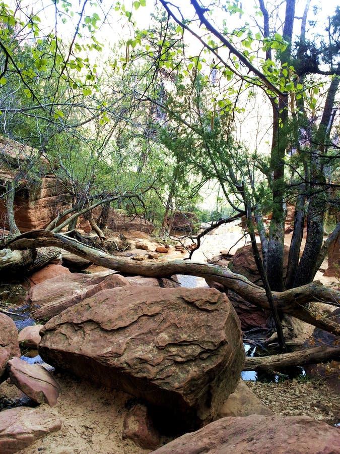 La visualizzazione ad albero è in Zion NP fotografia stock