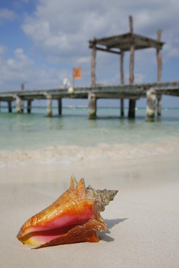 La vita è una spiaggia (conca) immagini stock
