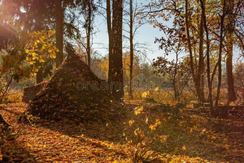 La vivienda de lámina vieja de la tribu antigua de Latgallians asperjó con las hojas de otoño anaranjadas foto de archivo