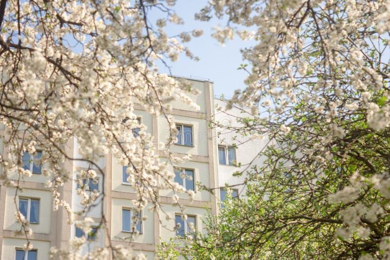 La voz de la primavera contra la perspectiva de árboles frutales de florecimiento, restableciendo después de un sueño del inviern foto de archivo libre de regalías