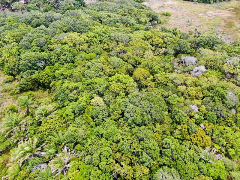 La vue aérienne de la forêt tropicale, jungle dans le Praia font le forte, Brésil images libres de droits