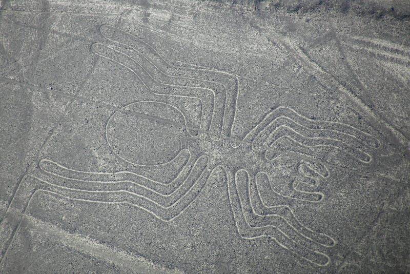 La vue aérienne de Nazca raye - le geoglyph d'araignée, Pérou photo stock