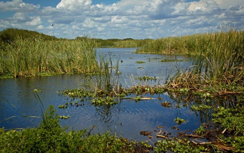 La vue aérienne des marais inondent, la Floride - Etats-Unis image stock