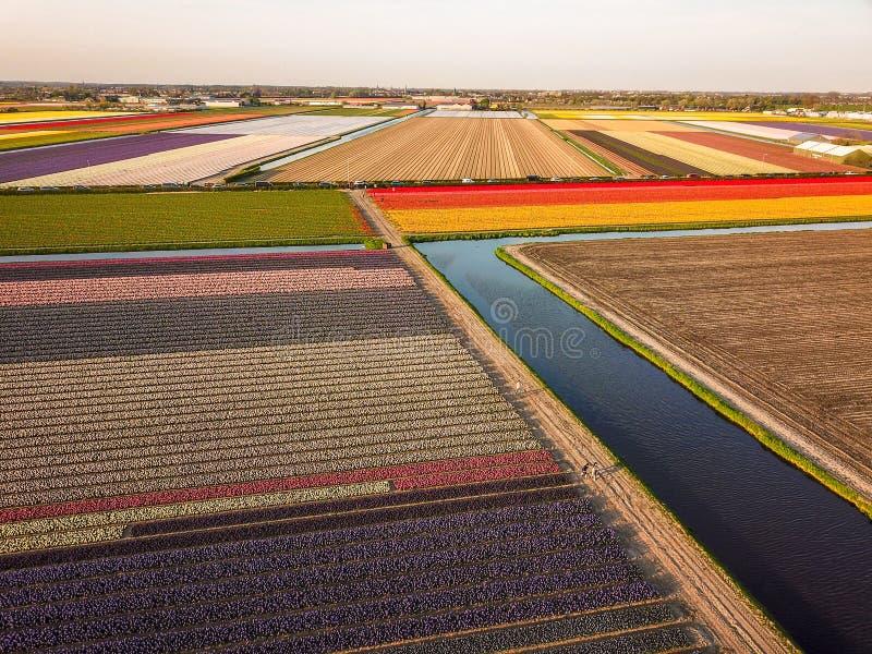 La vue aérienne des tflowers colorés met en place au ressort dans Lisse photographie stock