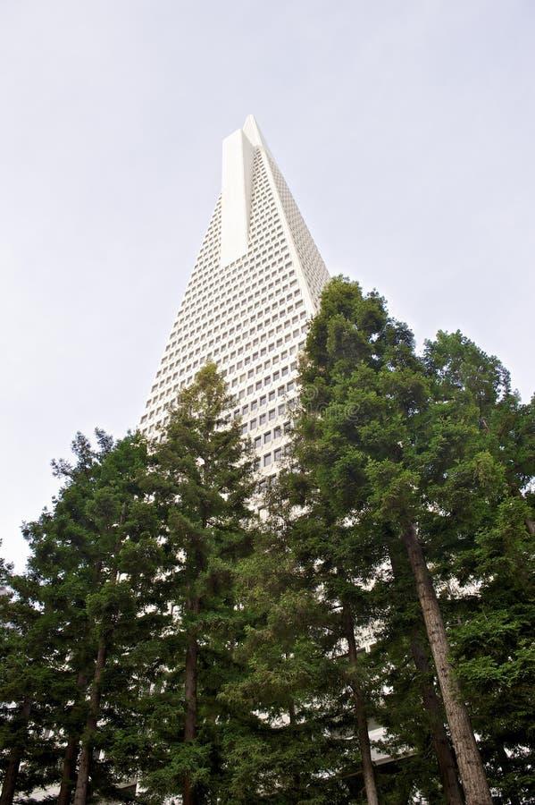 La vue d'angle faible de la pyramide San Francisco de Transamerica a conçu par William Pereira photographie stock