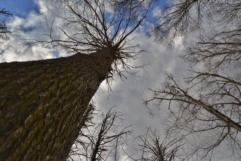 La vue d'un Sproutling photographie stock libre de droits