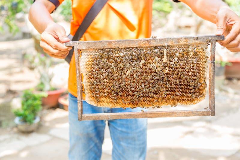 La vue d'une ruche avec du miel et des abeilles s'est tenue par un homme photos libres de droits