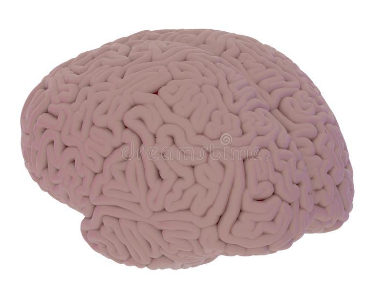 La vue de côté de cerveau diffus, d'isolement sur le fond blanc 3d rendent illustration stock