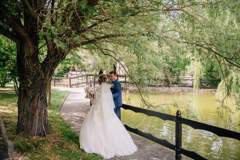 La vue de derrière du marié et la jeune mariée marchent en nature Les nouveaux mariés admirent les couronnes des arbres Juste obt photo libre de droits