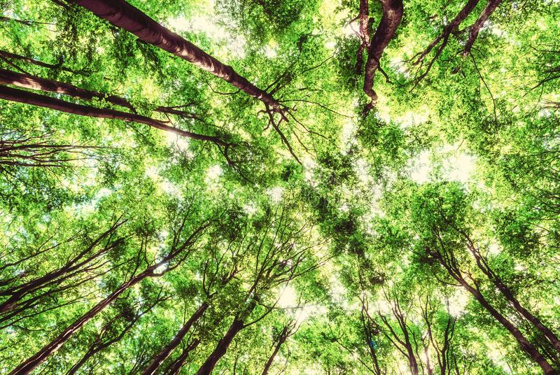 La vue de l'arbre couronne au printemps la forêt photos libres de droits