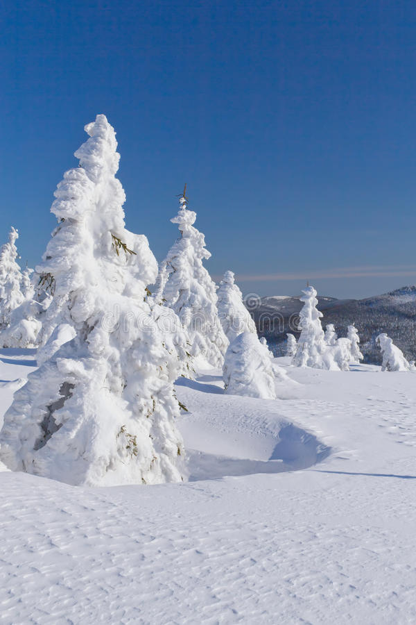 La vue de l'hiver de la neige a couvert la montagne et les arbres images libres de droits