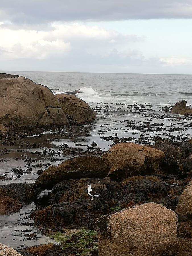La vue de mer des camps aboient photo stock