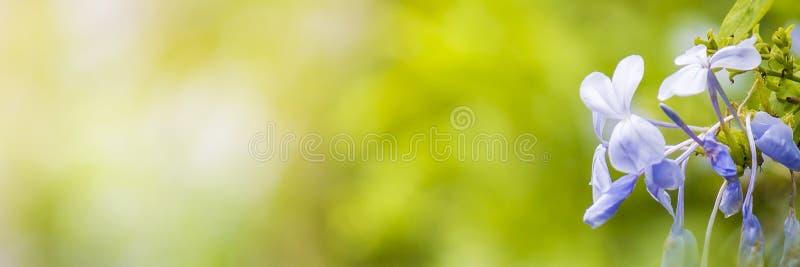La vue de nature du vert part sous le soleil Arbre vert naturel nous image stock