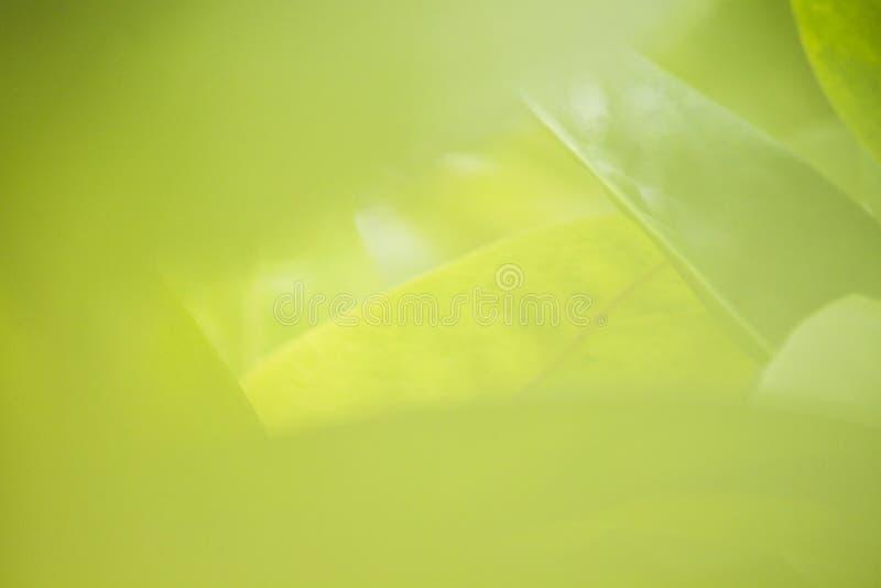 La vue de nature du vert part sous le soleil Arbre vert naturel nous photographie stock libre de droits