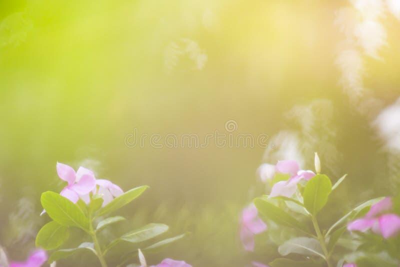 La vue de nature du vert part sous le soleil Arbre vert naturel nous images stock