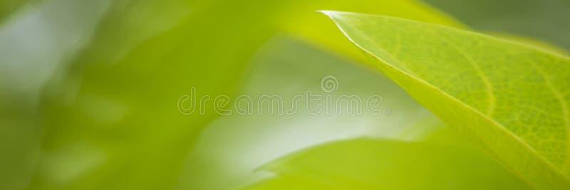 La vue de nature du vert part sous le soleil Arbre vert naturel nous photo libre de droits