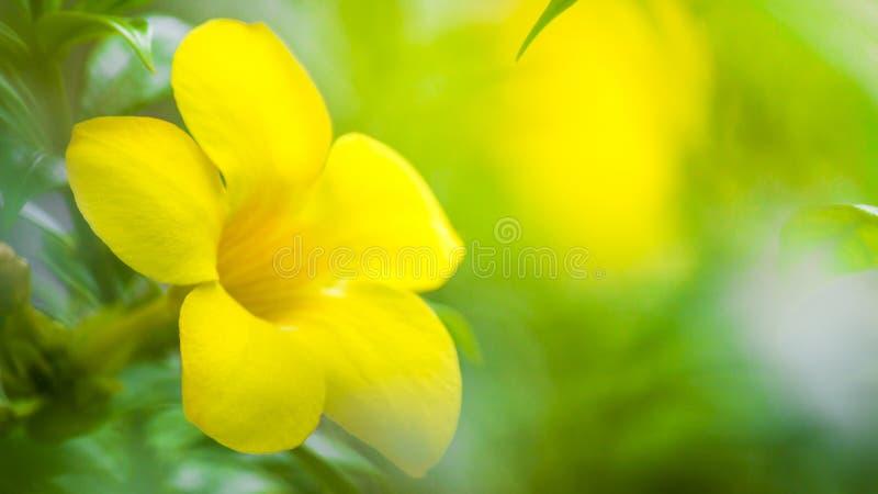 La vue de Naturel du vert part sous le soleil Arbre vert naturel u image stock