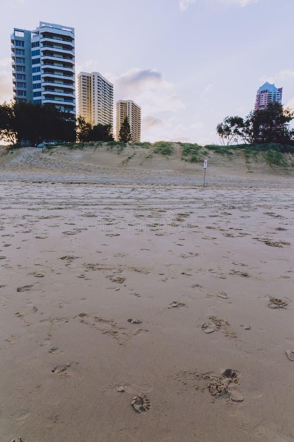 La vue de la plage principale en Gold Coast, le secteur comporte le sable d'or images libres de droits