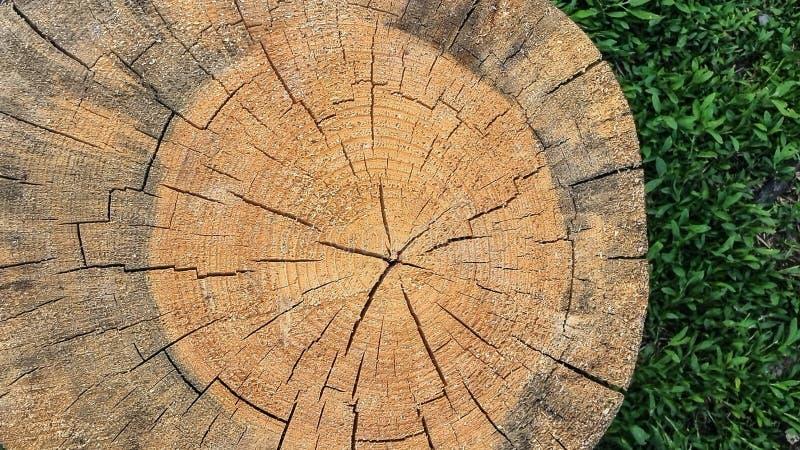 La vue de plan rapproché de la croix de fente a coupé la section d'une ouverture en bois l'herbe Texture organique naturelle, mod photos libres de droits