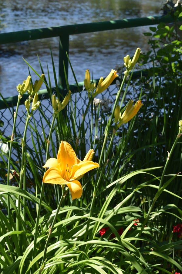 La vue de rivière de Deerfield du pont de Fowers, Shelburne tombe, Franklin County, Massacusetts, Etats-Unis, Etats-Unis images libres de droits