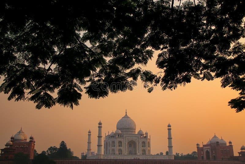 La vue de Taj Mahal a encadré par une couronne d'arbre au coucher du soleil, Âgrâ, Uttar photos stock