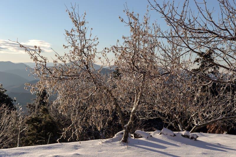 La vue des montagnes dans la distance et les arbres couverts de glace photographie stock