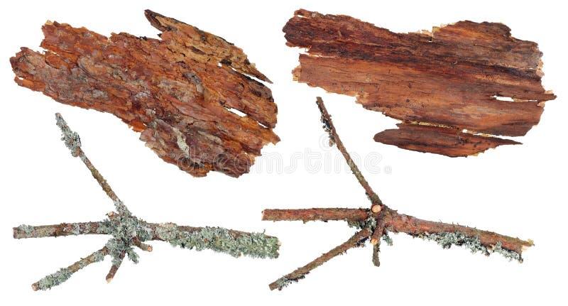 La vue dessus et bas d'un fragment d'écorce et de branche de pin photo libre de droits